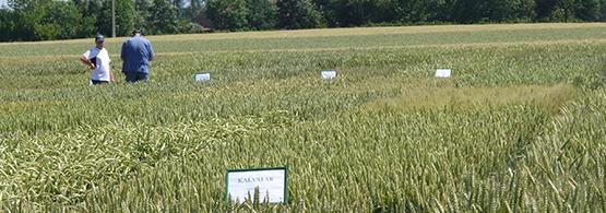 Protection int gr e du bl chambre d 39 agriculture nord pas de calais - Chambre d agriculture pas de calais ...