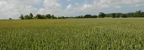 Valeur v nale de terres agricoles chambre d 39 agriculture - Chambre d agriculture pas de calais ...